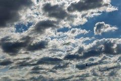 与飞行燕子灰色白的高积云和剪影的美好的剧烈的云彩scape在一个夏天早晨 免版税图库摄影