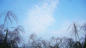 与飞行的风筝和草花的蓝天 影视素材