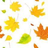 与飞行秋叶的无缝的背景 库存图片