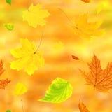 与飞行秋叶的无缝的背景 免版税图库摄影