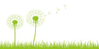 与飞行种子的两个蒲公英剪影在绿色草甸 库存例证