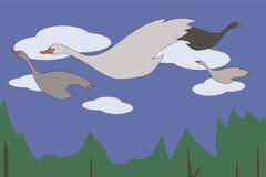 与飞行通过与白色云彩的蓝天的红色额嘴的鹅天鹅白色灰色在绿色森林 皇族释放例证