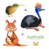 与食火鸡,猕猴桃鸟,袋鼠,蝴蝶,石头的逗人喜爱的收藏 皇族释放例证