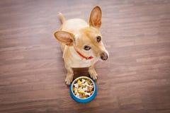 与食物碗的饥饿的狗 免版税库存照片