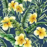 与香蕉叶子和羽毛的水彩无缝的样式 手画绿叶热带棕榈早午餐和赤素馨花 免版税库存图片