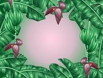 与香蕉叶子的背景 热带叶子、花和果子的装饰图象 给的小册子做广告设计 图库摄影