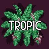 与香蕉叶子的背景 热带叶子、花和果子的装饰图象 给的小册子做广告设计 免版税库存图片