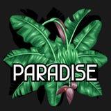 与香蕉叶子的背景 热带叶子、花和果子的装饰图象 给的小册子做广告设计 库存图片
