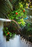 与马尔代夫村庄热带花和植物的典型的白色简单的农村房子篱芭建筑学  库存图片