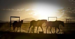 与马的日落 免版税库存照片