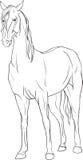与马的着色页 库存图片