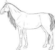 与马的着色页 免版税库存照片