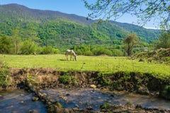 与马的美好的山风景 库存照片
