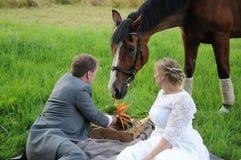 与马的野餐 库存图片