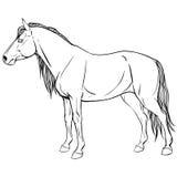 与马的页着色 免版税图库摄影