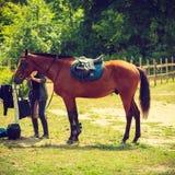 与马鞍的美丽的棕色阿拉伯品种马 库存照片
