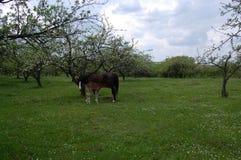 与驹的一匹母马在庭院里 图库摄影