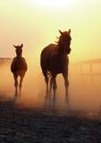 与驹的一匹母马从牧场地返回 免版税库存照片