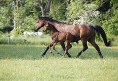 与驹的母马在牧场地 免版税图库摄影