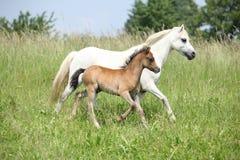 与驹的母马在pasturage 库存图片