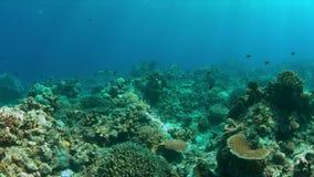与驼背攫夺者学校的珊瑚礁  4K 影视素材