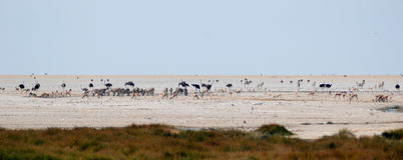 与驼鸟、斑马和跳羚的Waterhole 免版税库存图片
