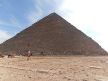 与骆驼司机的伟大的金字塔 免版税库存图片