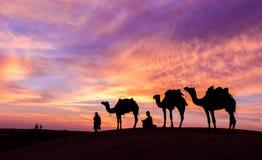 与骆驼和剧烈的天空的沙漠scence 库存图片