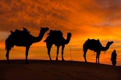 与骆驼和剧烈的天空的沙漠scence 免版税库存图片