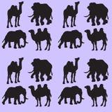 与骆驼和大象的例证背景 无缝的模式 皇族释放例证