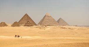 与骆驼的伟大的金字塔 库存照片