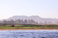 与骆驼的埃及风景在银行 免版税库存图片
