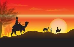 与骆驼的日落 免版税库存图片