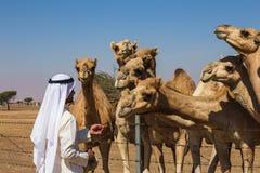 与骆驼的沙漠风景 库存照片