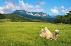 与骆驼的Beautifil风景在领域 免版税库存图片