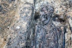 与骨骼和头骨的考古学挖掘 免版税图库摄影