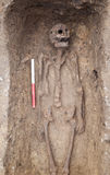 与骨骼的考古学挖掘 免版税库存照片