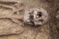 与骨骼的考古学挖掘 库存图片