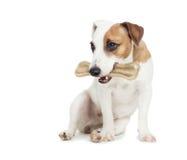 与骨头的小狗在白色 免版税库存照片