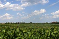 与高压水炮的浇灌的玉米 库存照片