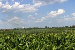 与高压水炮的浇灌的玉米 免版税库存照片