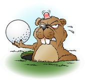 与高尔夫球的恼怒的草原土拨鼠 免版税库存照片