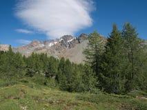 与高山和牧场地的高山风景在夏天在Valmalenco 免版税图库摄影