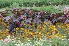 与高年鉴的一张开花的夏天庭院床 免版税图库摄影