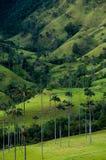 与高棕榈树的绿色山谷在瓦尔de 免版税库存图片