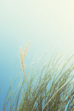 与高草和蓝天, Luskentyr的沙丘 免版税库存照片