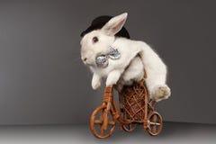 与高顶丝质礼帽骑马自行车的逗人喜爱的兔子 库存照片