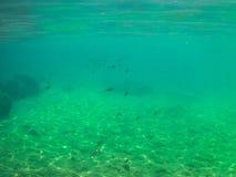 与鱼和岩石的海底 库存图片