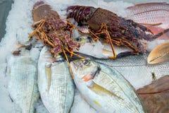 与鱼和龙虾的冰显示 库存图片