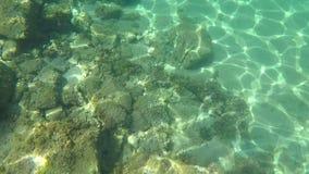 与鱼学校的水下的生活在西班牙沿海的 影视素材